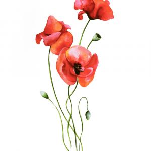 Valmue blomster plakat