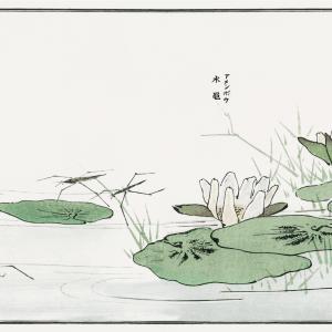Water striders on a pond - Japansk kunstplakat