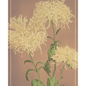 Yellow Chrysanthemums - Japansk fotokunst plakat