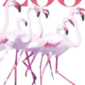 Zoo plakat - Flamingos