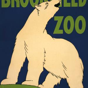 Zoo plakat - Isbjørn
