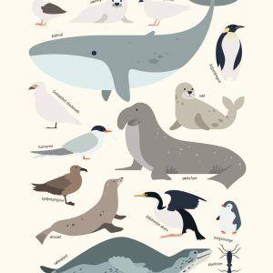 Antarktis dyr - Børneplakat