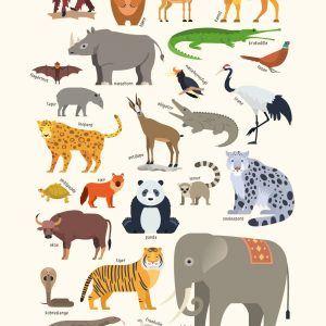 Asiens dyr - Børneplakat