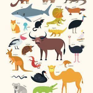 Australiens dyr - Børneplakat