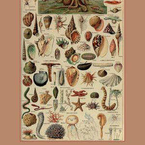 Mollusques - Adolphe Millot vintage leksikon plakat