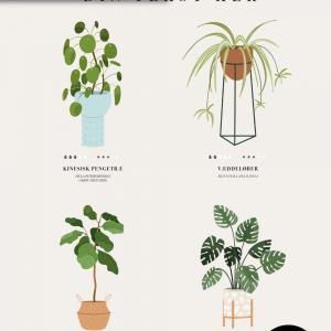 Plante guide - 4 planter - Personliggør